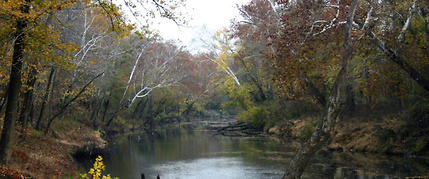 paddling bald cypress swamp kentucky